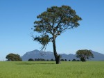 The Grampians near Dunkeld